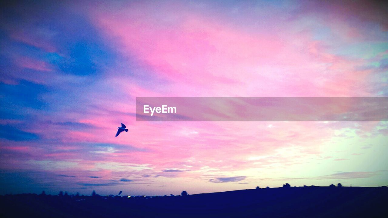 sunset, silhouette, sky, flying, cloud - sky, beauty in nature, bird, nature, animal themes, animals in the wild, scenics, outdoors, low angle view, no people, tranquil scene, day