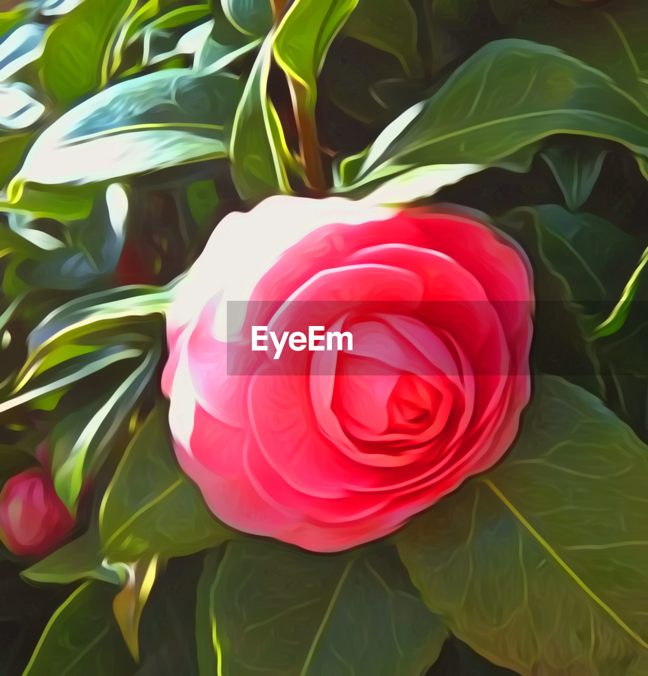 plant part, leaf, plant, freshness, beauty in nature, vulnerability, close-up, fragility, petal, flower, flower head, flowering plant, green color, nature, inflorescence, rose, growth, rose - flower, no people, red, outdoors, softness, flower arrangement