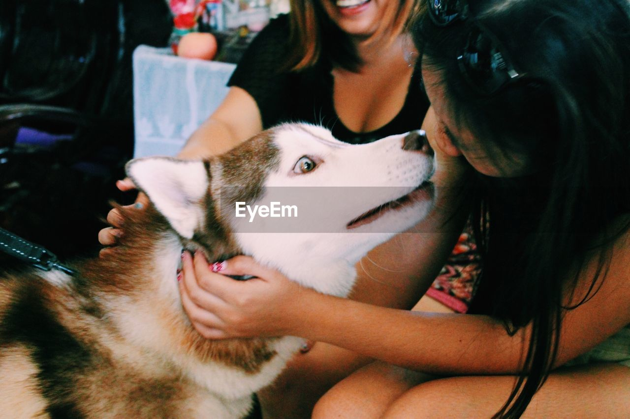 pets, dog, domestic animals, one animal, mammal, canine, bonding, indoors, real people, love, young animal, puppy, home interior, friendship, lifestyles, one person, men, day, close-up, people