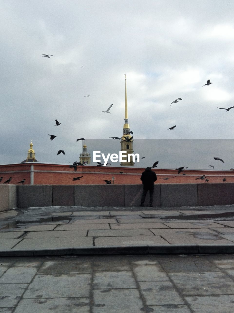 VIEW OF SEAGULL FLYING OVER BUILDING