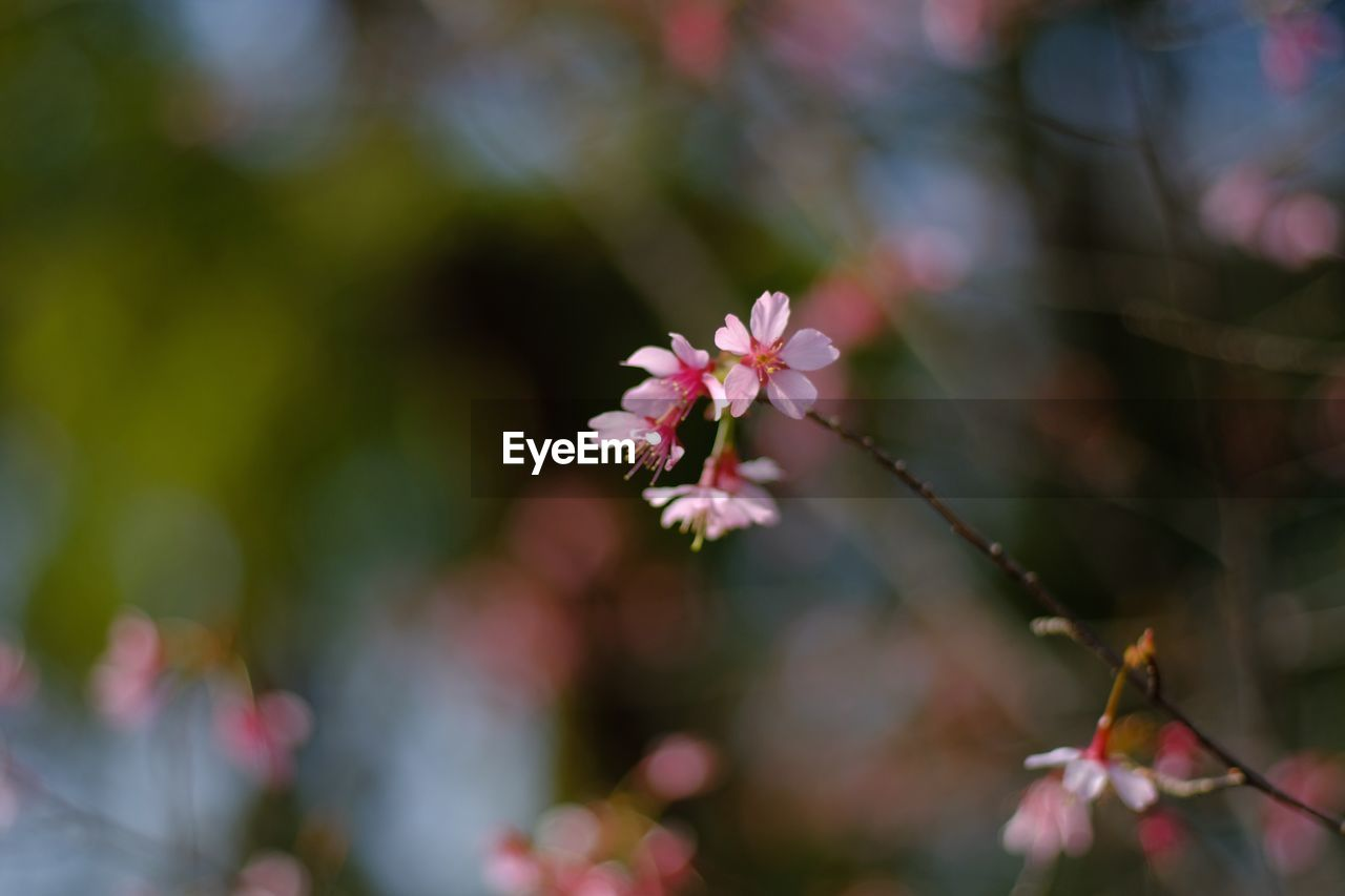 CLOSE-UP OF FRESH FLOWER TREE IN SUNLIGHT