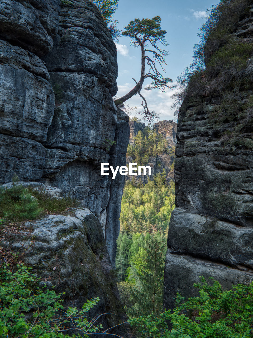 plant, tree, nature, beauty in nature, rock, no people, day, tranquility, land, solid, rock - object, rock formation, tranquil scene, tree trunk, trunk, growth, scenics - nature, non-urban scene, forest, low angle view, outdoors, formation
