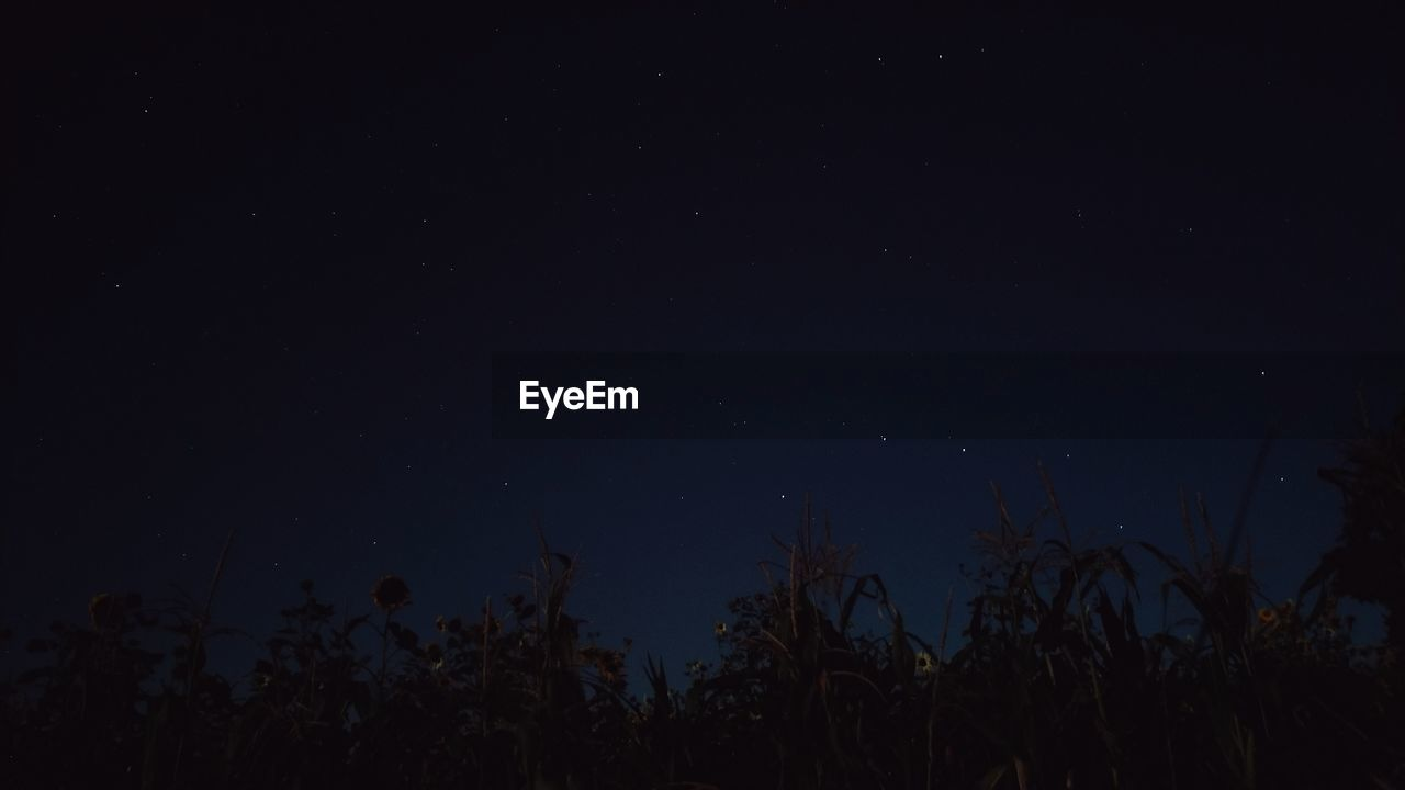 night, sky, star - space, plant, astronomy, space, beauty in nature, scenics - nature, tranquility, tree, star, tranquil scene, nature, no people, low angle view, growth, galaxy, silhouette, star field, idyllic, outdoors, dark, space and astronomy, moonlight
