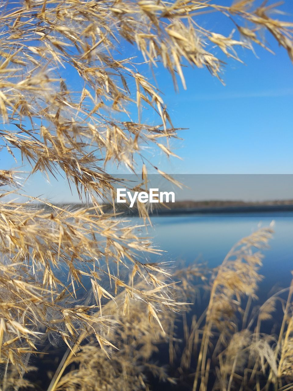 plant, beauty in nature, nature, focus on foreground, close-up, growth, day, tranquility, no people, water, sky, selective focus, outdoors, lake, land, sunlight, scenics - nature, landscape, tranquil scene, stalk