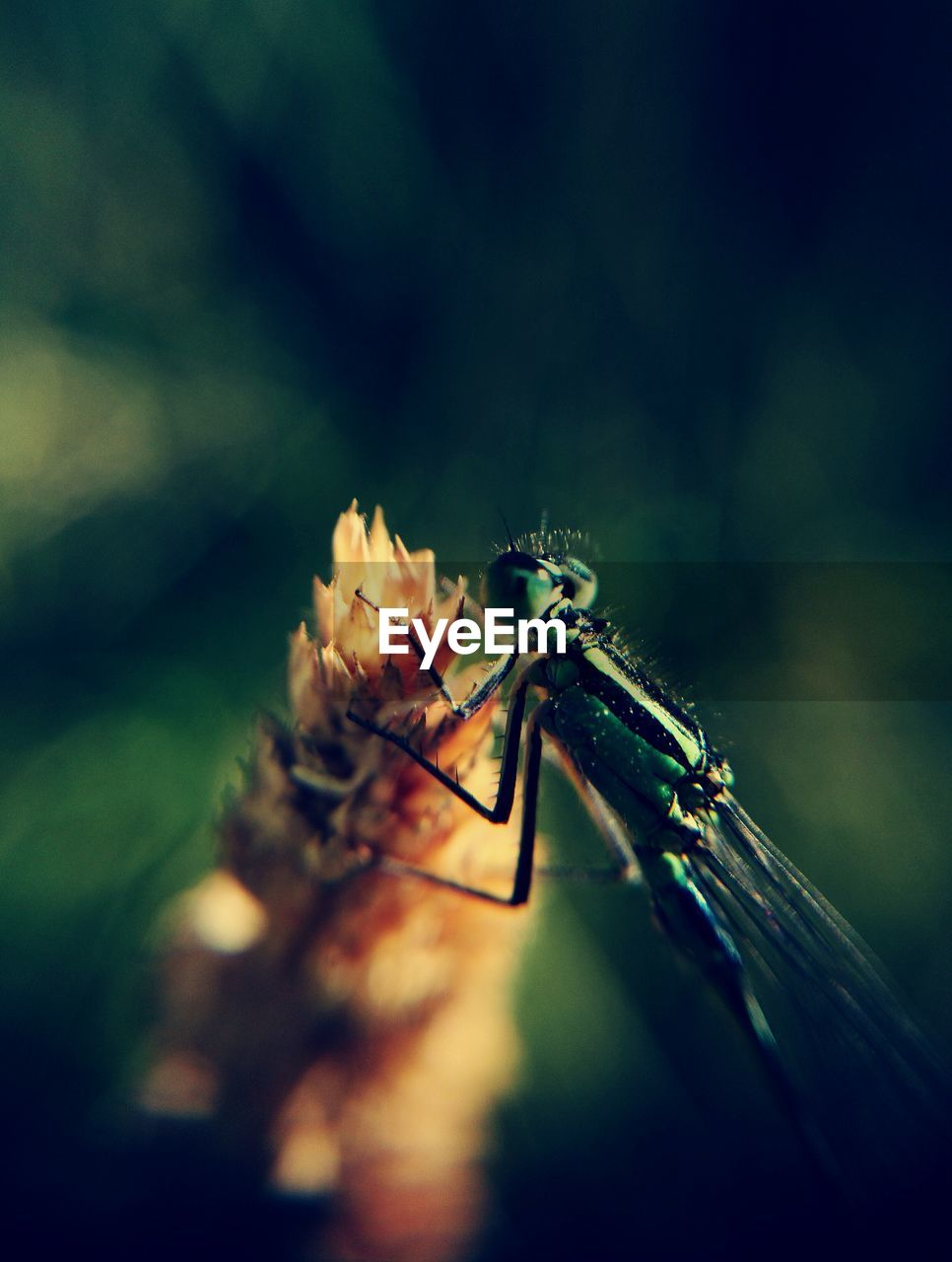 insect, animal themes, one animal, animals in the wild, animal wildlife, no people, close-up, damselfly, day, nature, outdoors