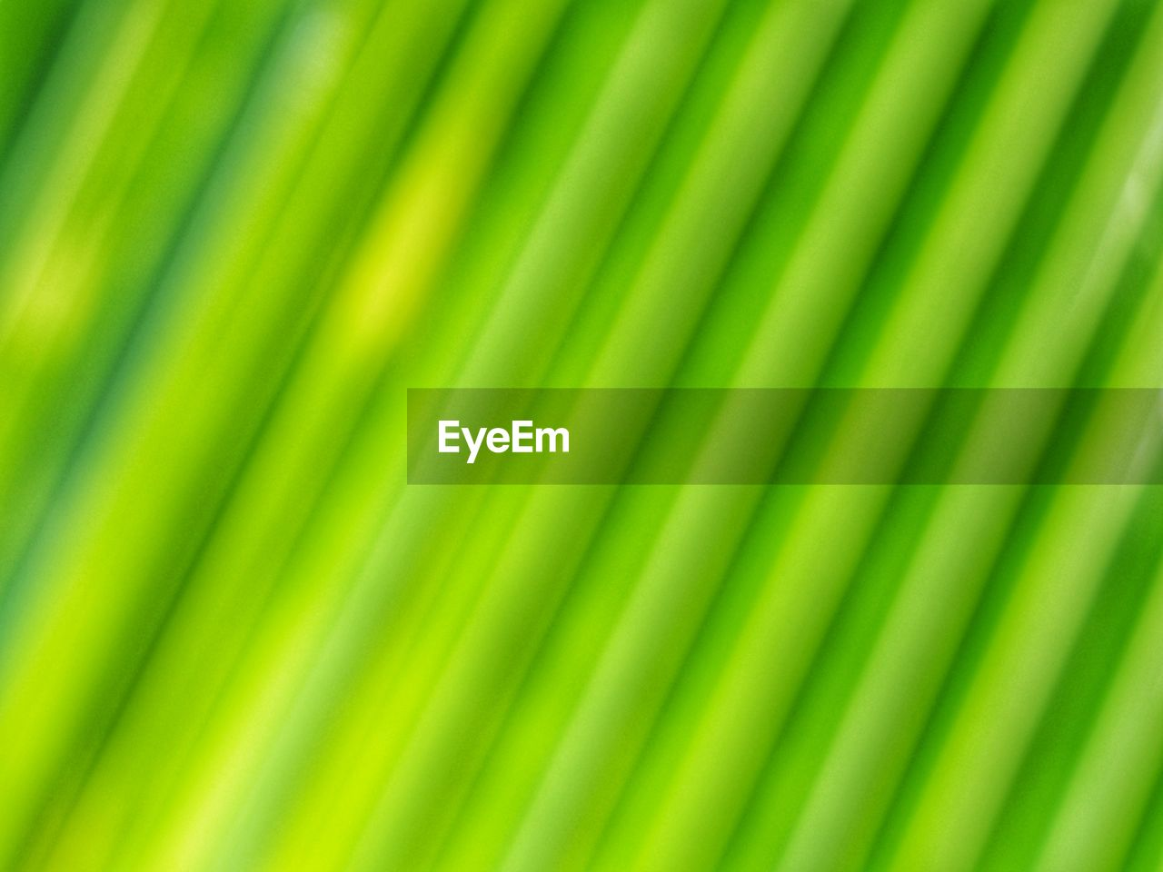 backgrounds, green color, full frame, no people, pattern, close-up, textured, palm leaf, palm tree, beauty in nature, leaf, nature, plant part, freshness, natural pattern, plant, growth, abstract, vibrant color, tropical climate, abstract backgrounds