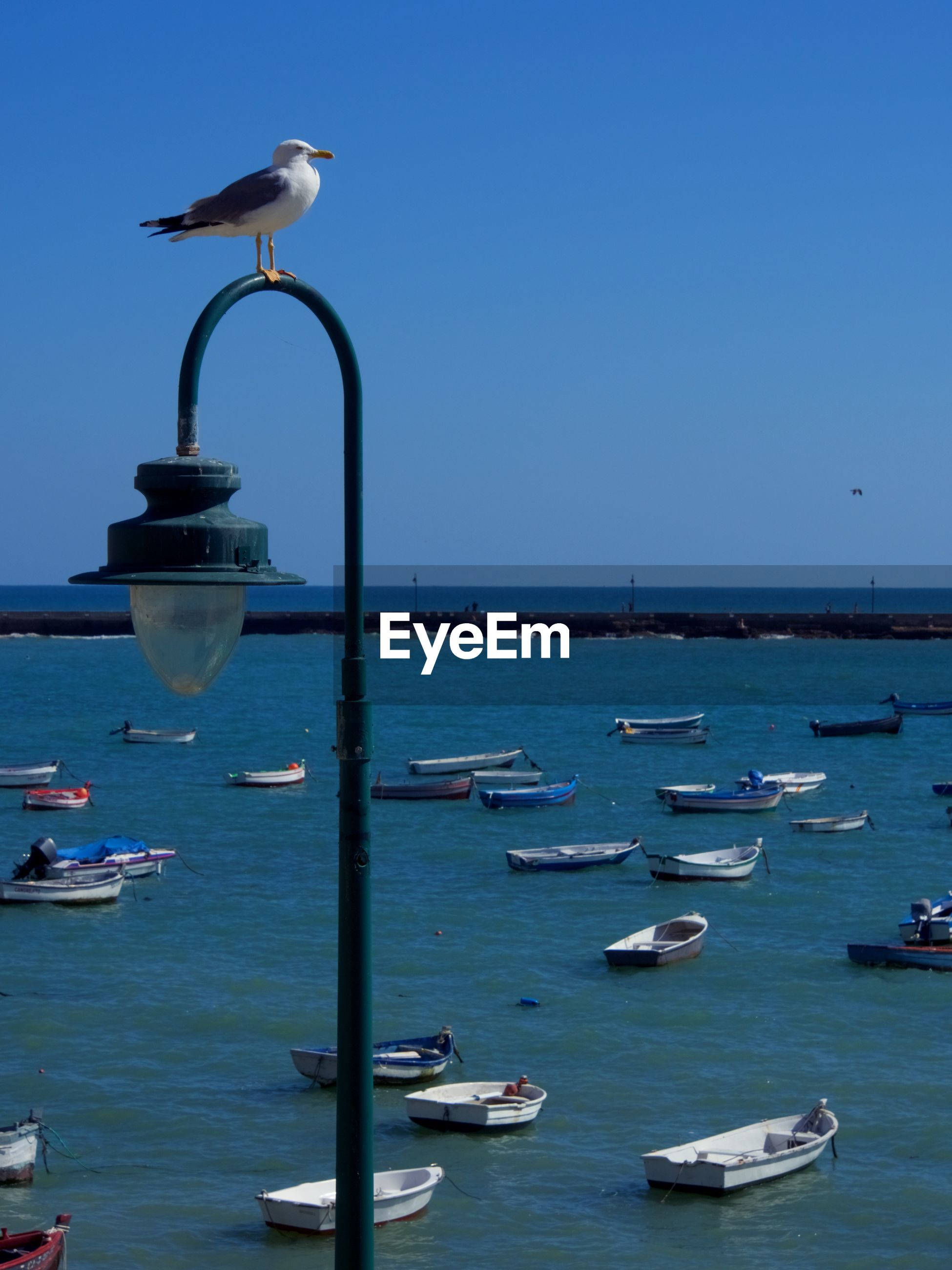 SEAGULLS PERCHING ON SEA AGAINST CLEAR SKY