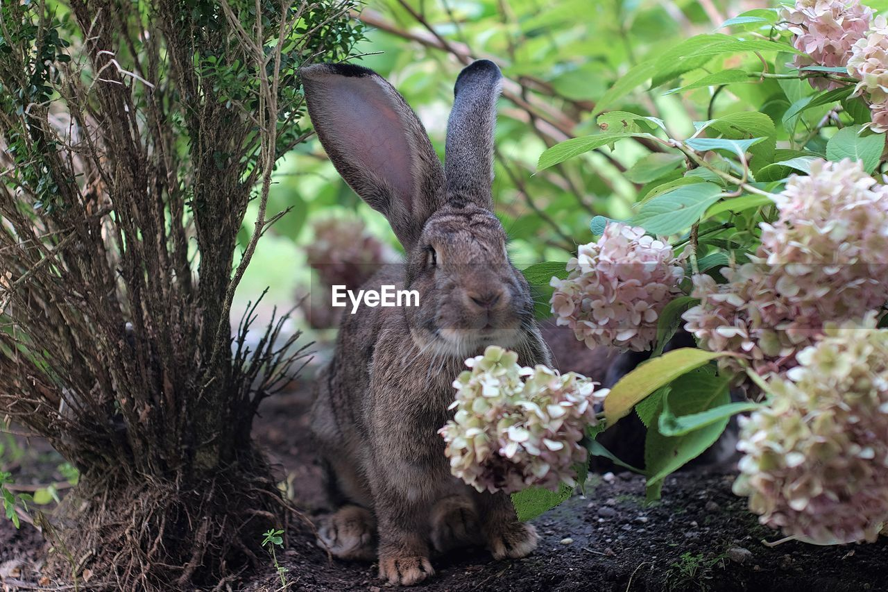 Close-up of rabbit by flowering plants