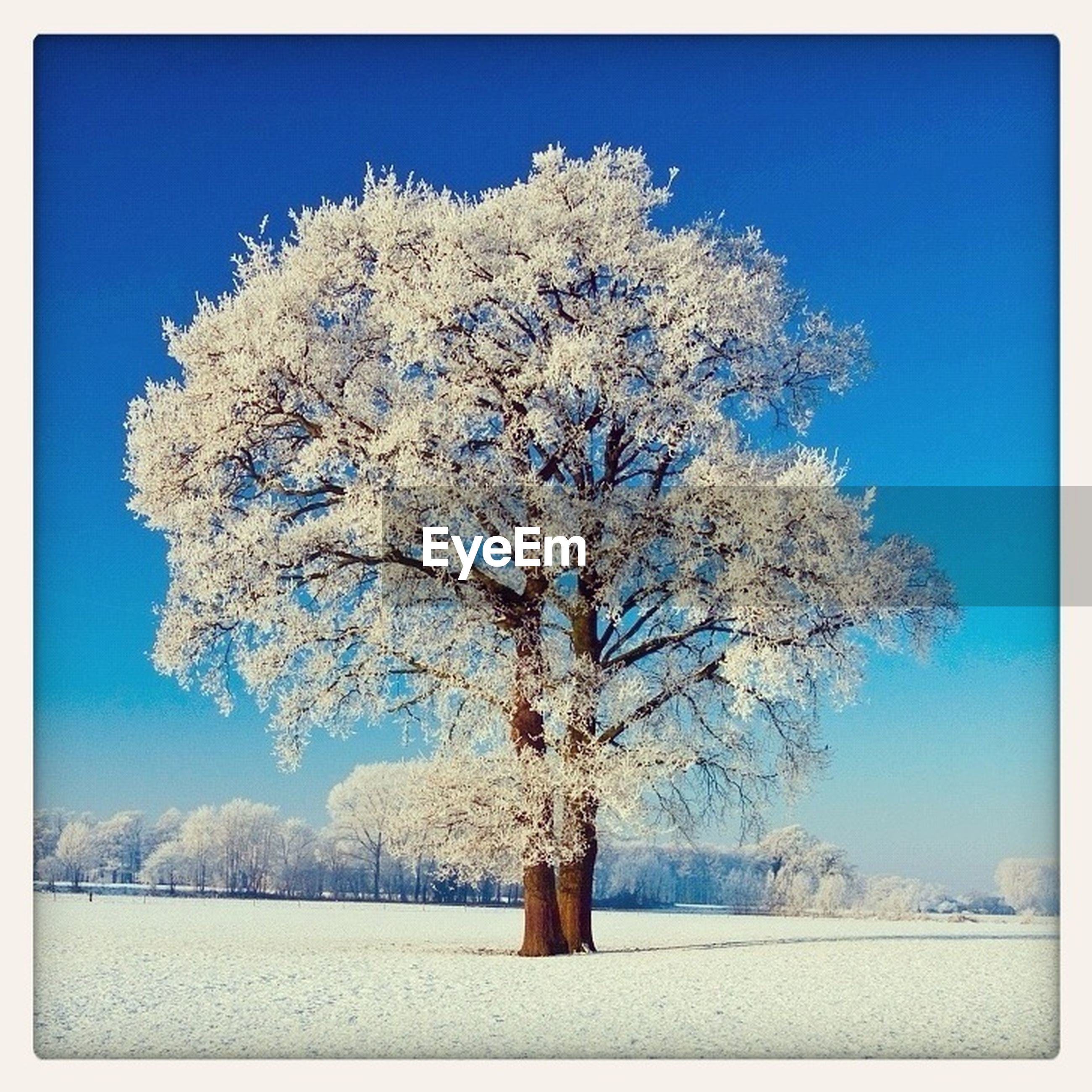 snow, winter, cold temperature, tree, season, blue, tranquility, tranquil scene, beauty in nature, landscape, nature, bare tree, scenics, clear sky, field, transfer print, branch, covering, sky, weather
