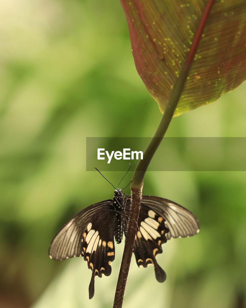 animals in the wild, animal themes, animal wildlife, insect, invertebrate, one animal, animal, focus on foreground, animal wing, close-up, beauty in nature, day, plant, nature, butterfly - insect, no people, outdoors, growth, leaf, plant part, pollination, butterfly