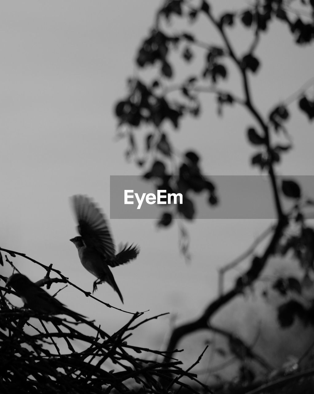 plant, sky, flying, animals in the wild, no people, nature, growth, animal themes, animal wildlife, tree, branch, focus on foreground, one animal, vertebrate, bird, animal, beauty in nature, flower, low angle view, close-up, outdoors