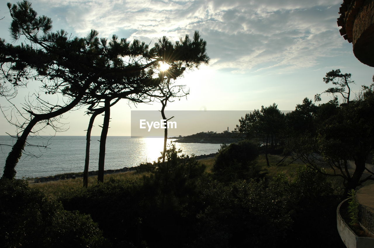 tree, water, sea, nature, beauty in nature, scenics, sky, tranquil scene, tranquility, horizon over water, no people, outdoors, sunset, beach, silhouette, growth, landscape, day
