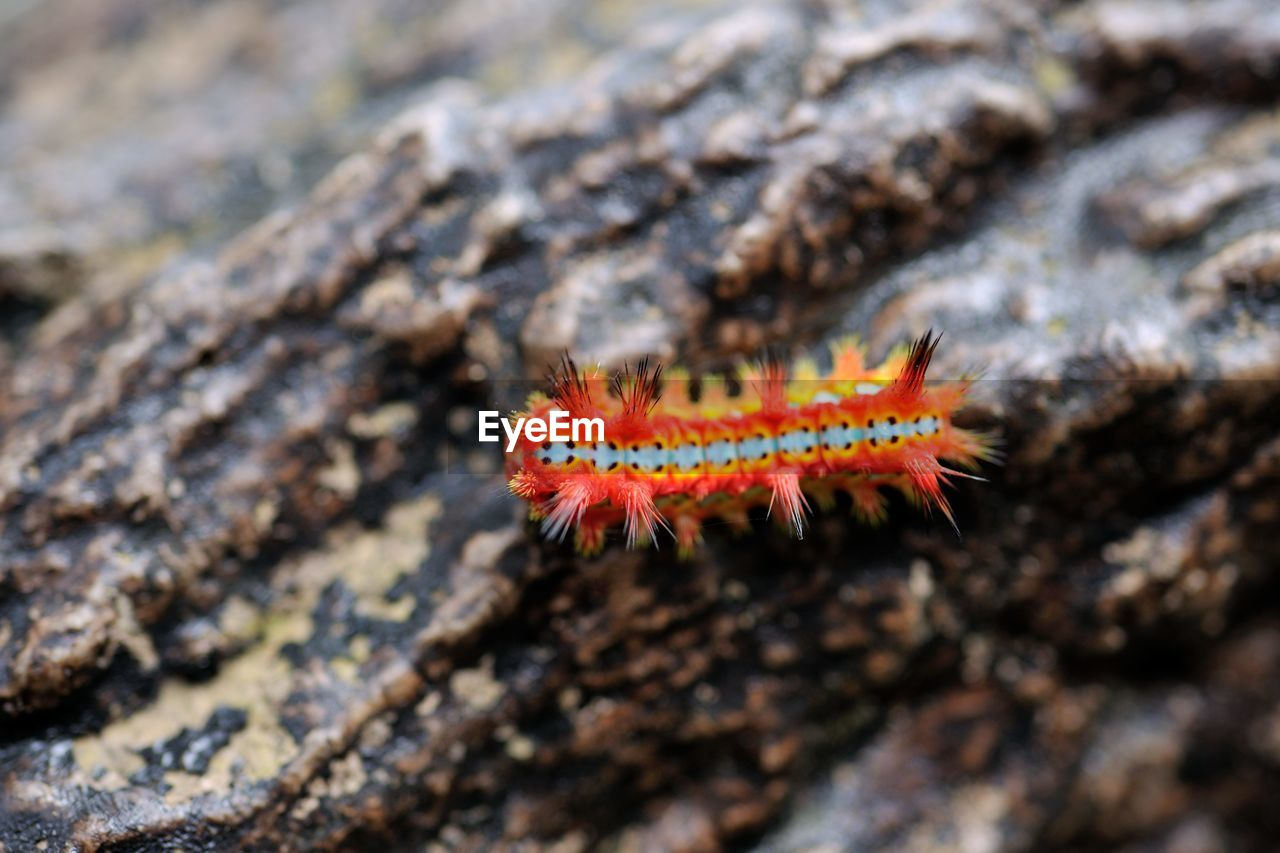 one animal, animal themes, animals in the wild, no people, close-up, nature, animal wildlife, insect, day, outdoors