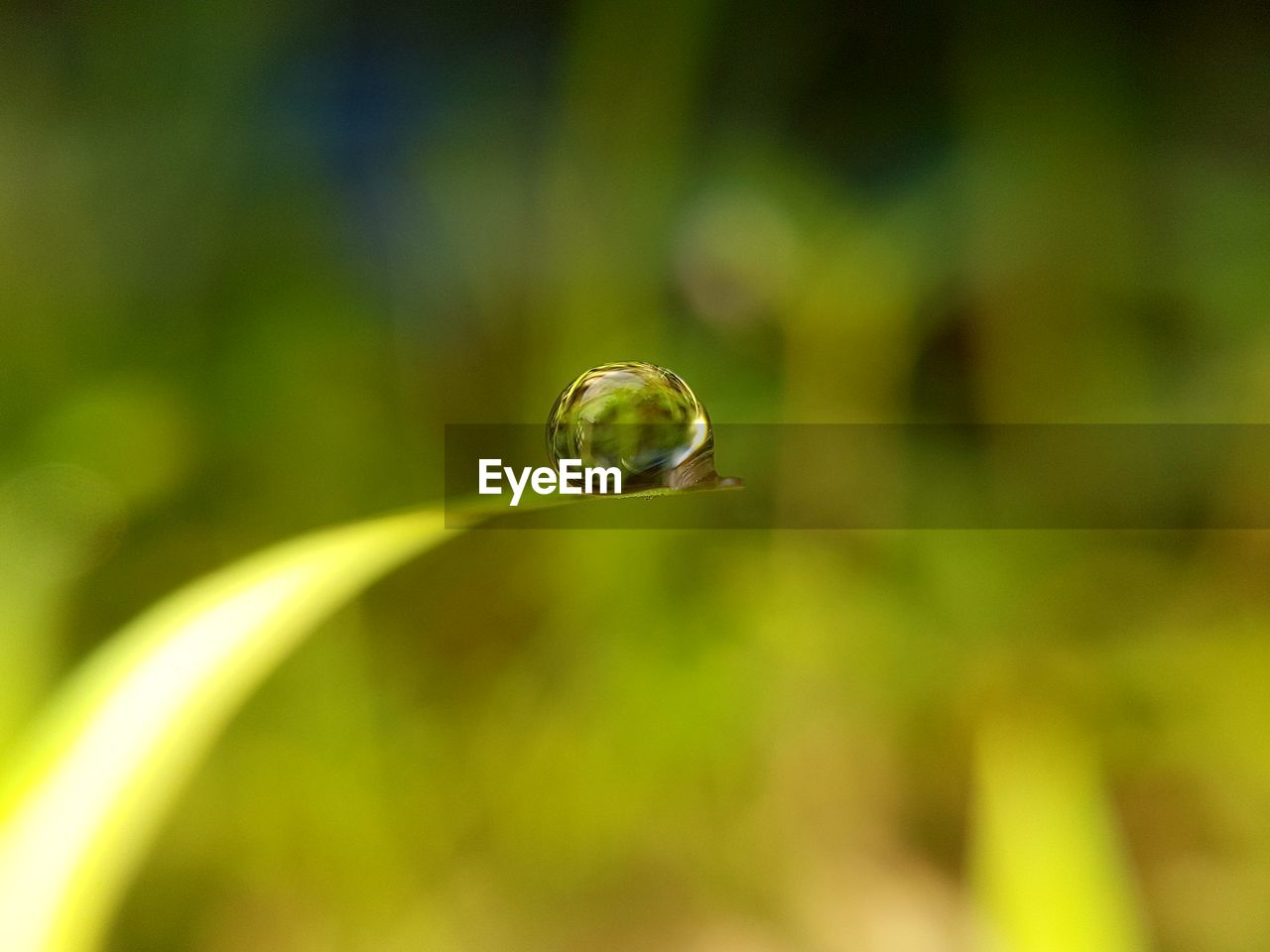 plant, close-up, green color, drop, vulnerability, selective focus, nature, growth, no people, focus on foreground, fragility, water, day, beauty in nature, plant part, leaf, outdoors, sphere, freshness, purity, blade of grass, dew, raindrop