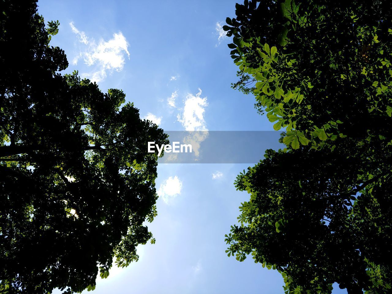 tree, sky, plant, beauty in nature, low angle view, growth, tranquility, nature, no people, day, tranquil scene, cloud - sky, outdoors, scenics - nature, sunlight, green color, blue, idyllic, silhouette, sunny, tree canopy