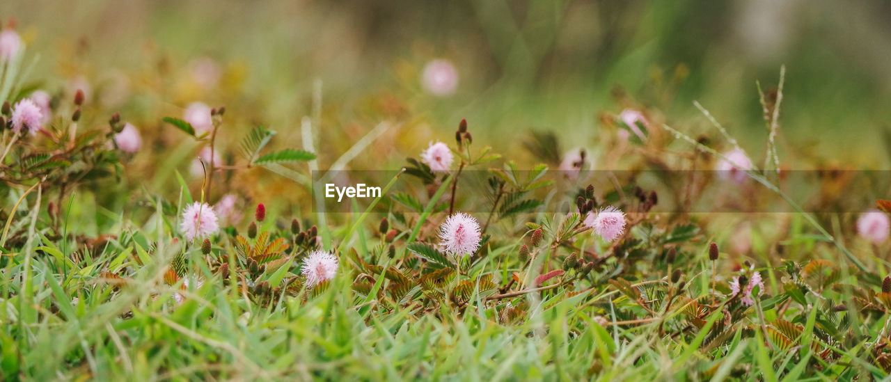 flower, growth, nature, grass, field, plant, beauty in nature, fragility, no people, day, freshness, outdoors, close-up, flower head