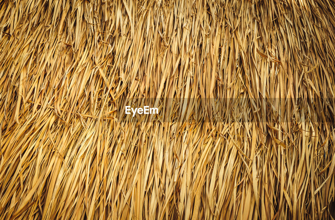 full frame, backgrounds, no people, pattern, nature, plant, brown, agriculture, close-up, day, textured, large group of objects, abundance, dry, outdoors, rural scene, high angle view, cereal plant, land, gold colored