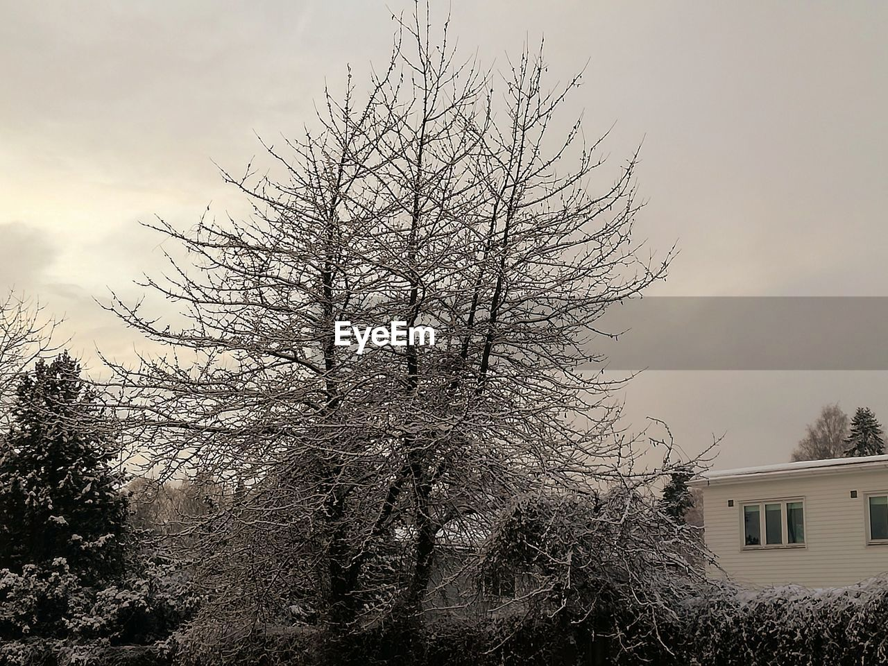 tree, sky, building exterior, bare tree, architecture, built structure, plant, nature, building, no people, house, cloud - sky, branch, winter, outdoors, day, low angle view, beauty in nature, residential district