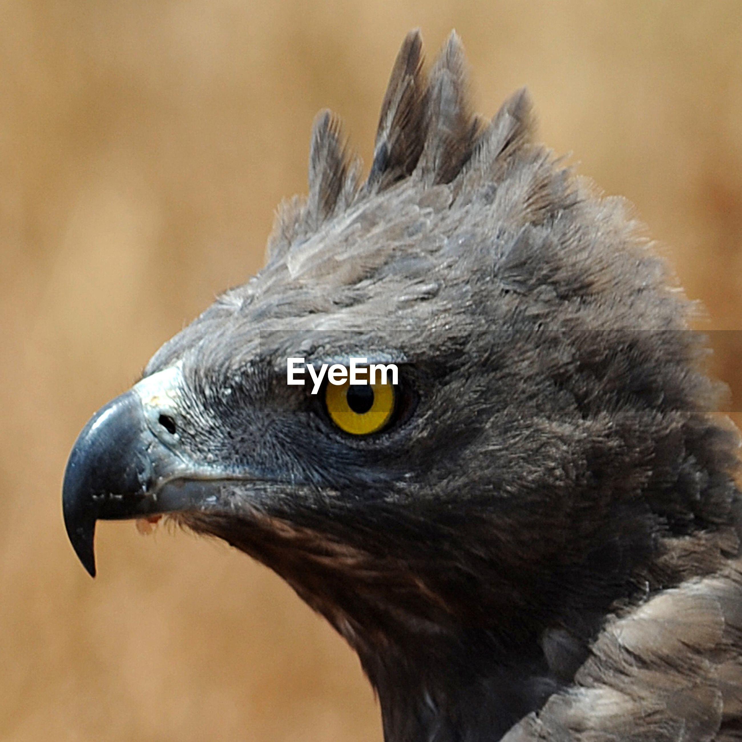 Close-up of black bird looking away outdoors