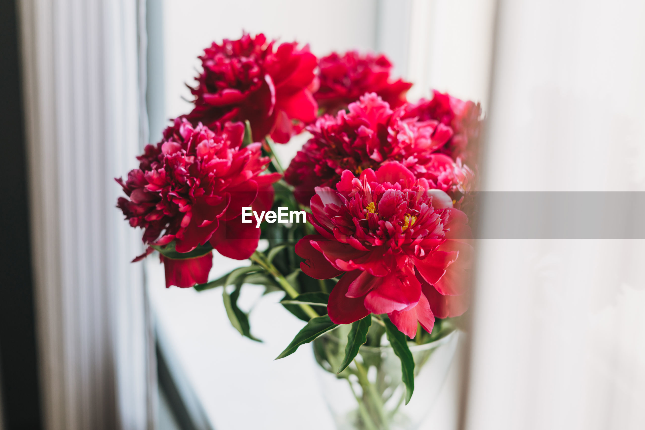 CLOSE-UP OF RED ROSE BOUQUET