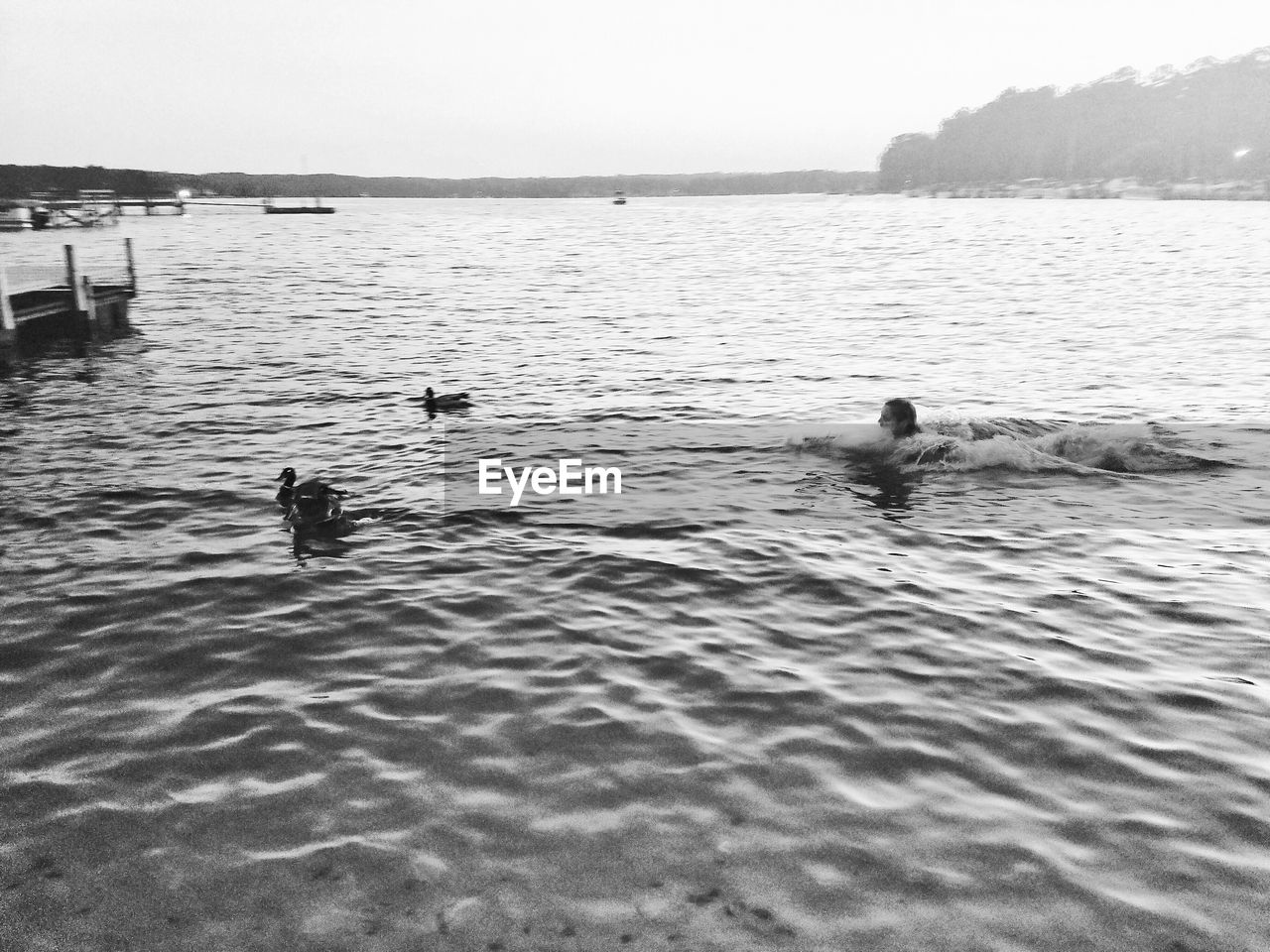 High angle view of girl swimming with ducks in lake