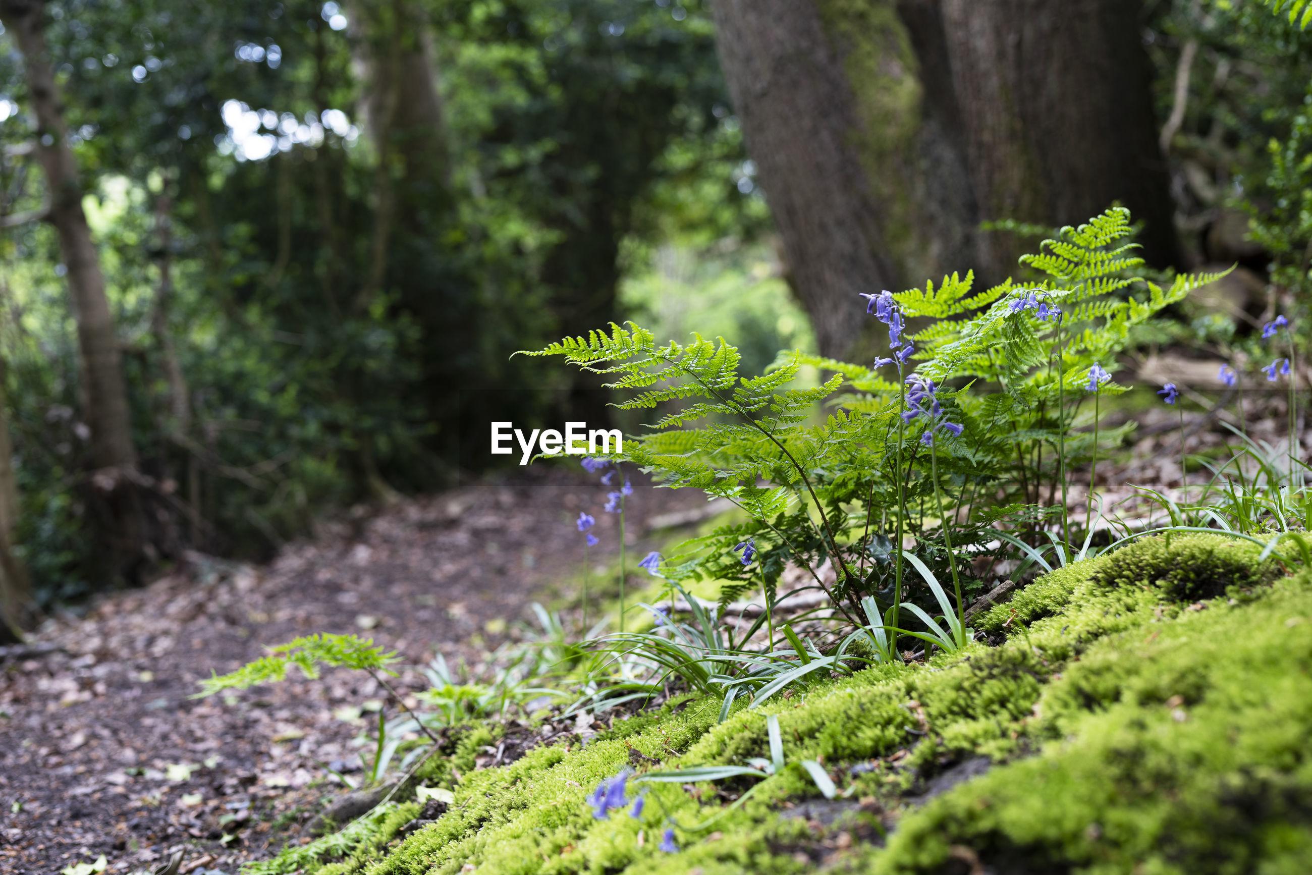 PLANT GROWING ON TREE