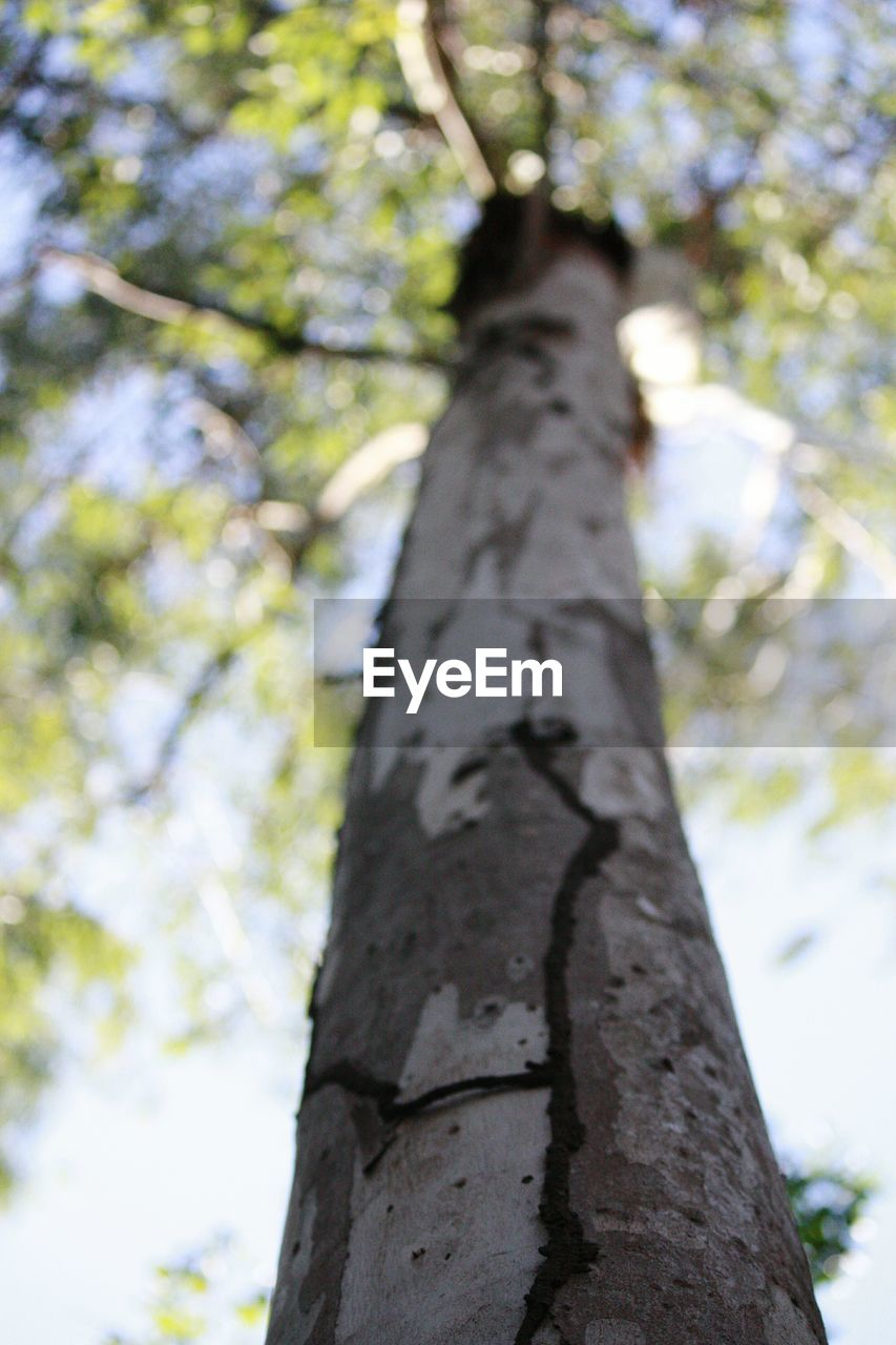 tree trunk, tree, growth, low angle view, nature, day, focus on foreground, no people, outdoors, branch, beauty in nature, close-up, sky