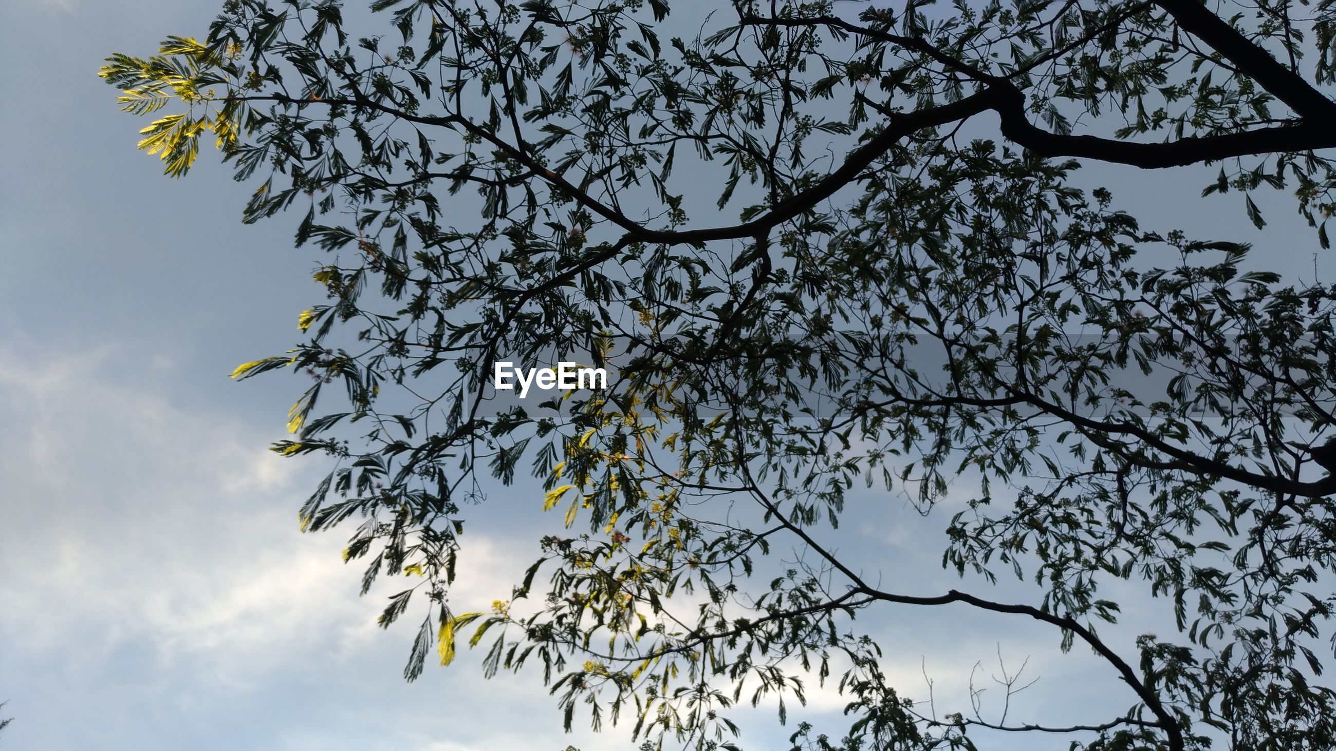 LOW ANGLE VIEW OF TREE BRANCH