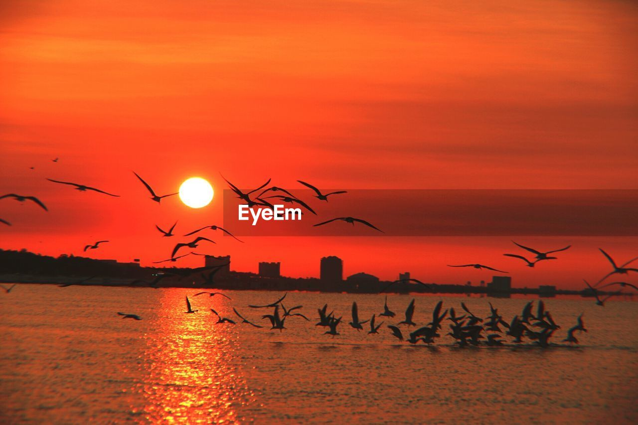 Silhouette Birds Flying Over Sea Against Dramatic Sky During Sunset
