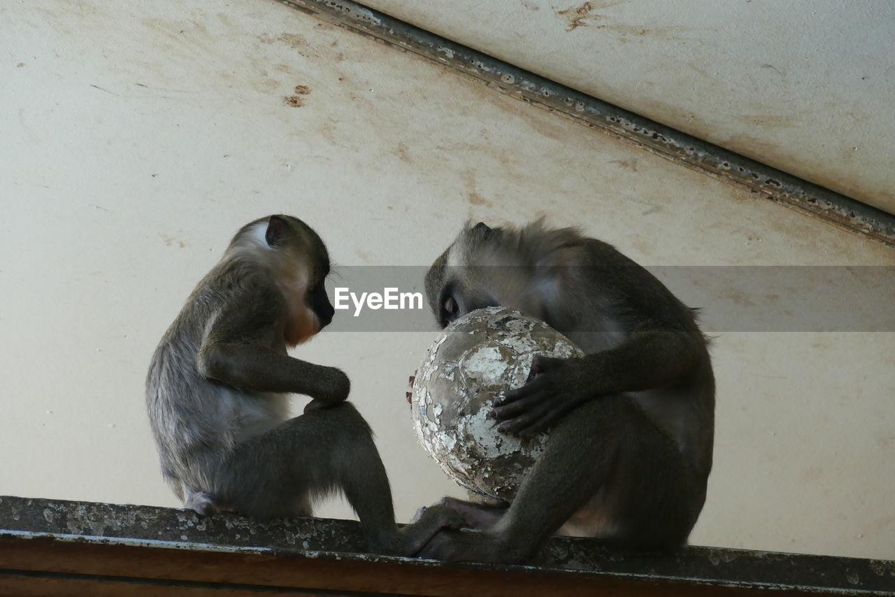 Gorilla Sitting On Retaining Wall