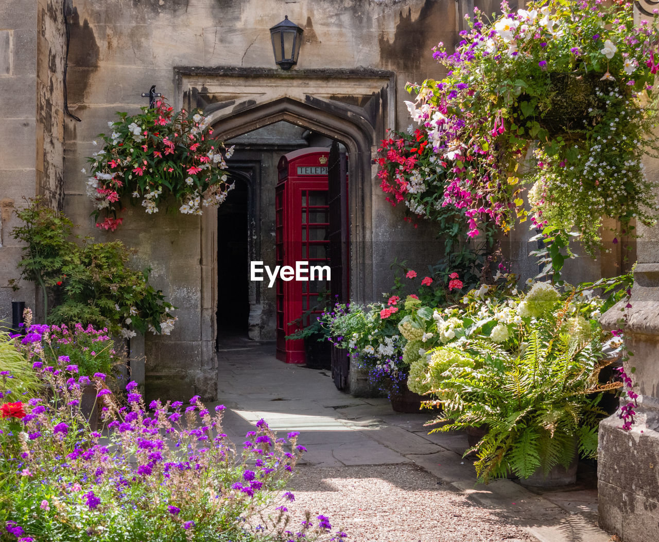 flowering plant, flower, plant, architecture, building exterior, built structure, nature, entrance, no people, building, door, beauty in nature, pink color, outdoors, house, day, growth, window, bush, footpath, ornamental garden