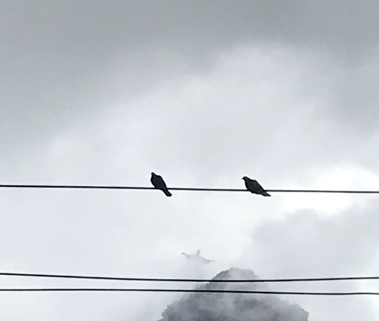 bird, vertebrate, animal themes, animal wildlife, animals in the wild, animal, low angle view, cable, perching, electricity, sky, power line, cloud - sky, connection, one animal, no people, day, nature, outdoors, power supply