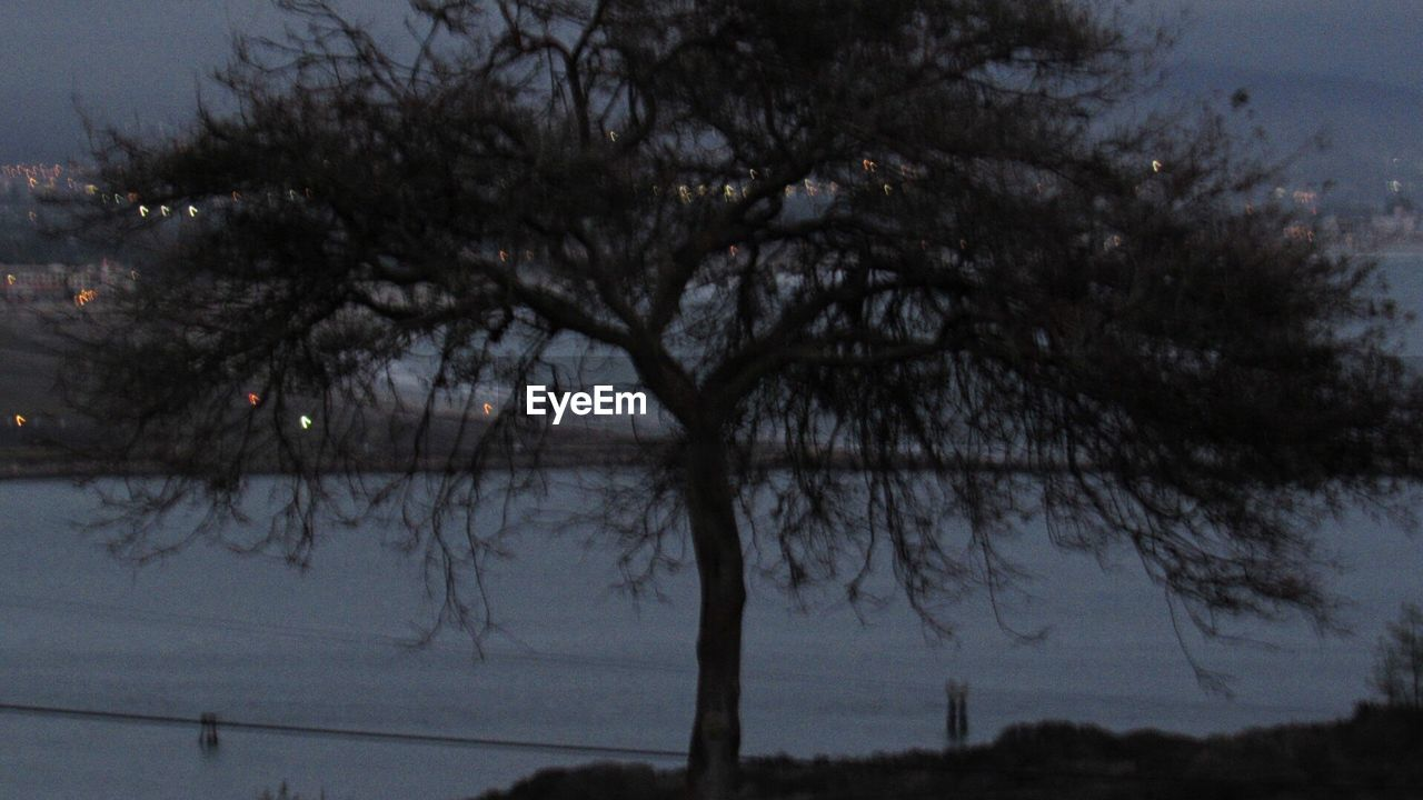 tree, nature, water, beauty in nature, no people, tranquility, outdoors, branch, sky, winter, scenics, lake, day