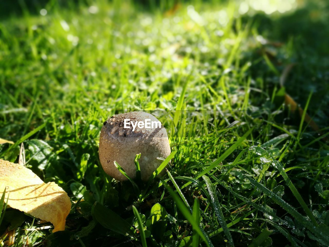 mushroom, nature, close-up, growth, grass, no people, outdoors, fungus, toadstool, day, beauty in nature, fragility, freshness, fly agaric