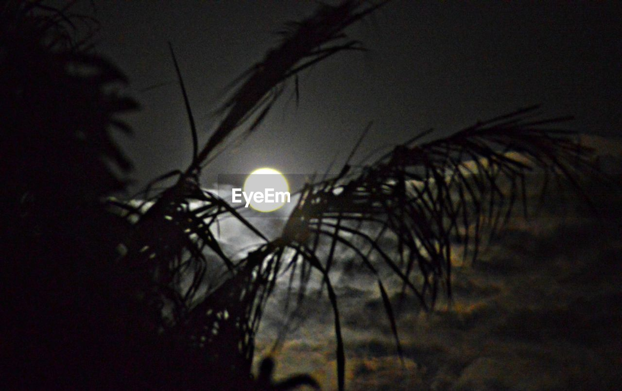 moon, night, sky, no people, nature, plant, silhouette, growth, selective focus, low angle view, full moon, tree, illuminated, outdoors, focus on foreground, moonlight, tranquility, close-up, dusk, dark, light, planetary moon