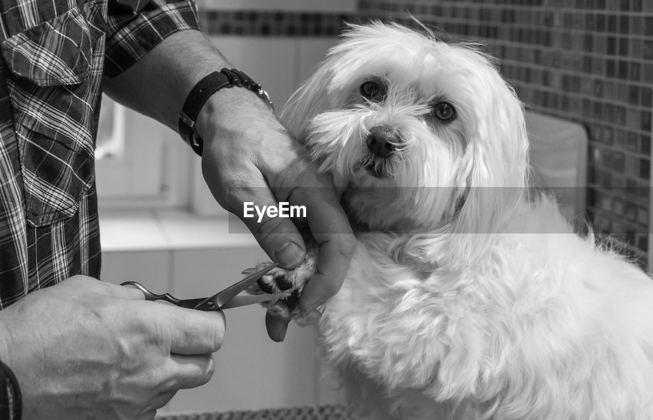 Close-Up Of Hand Grooming Dog