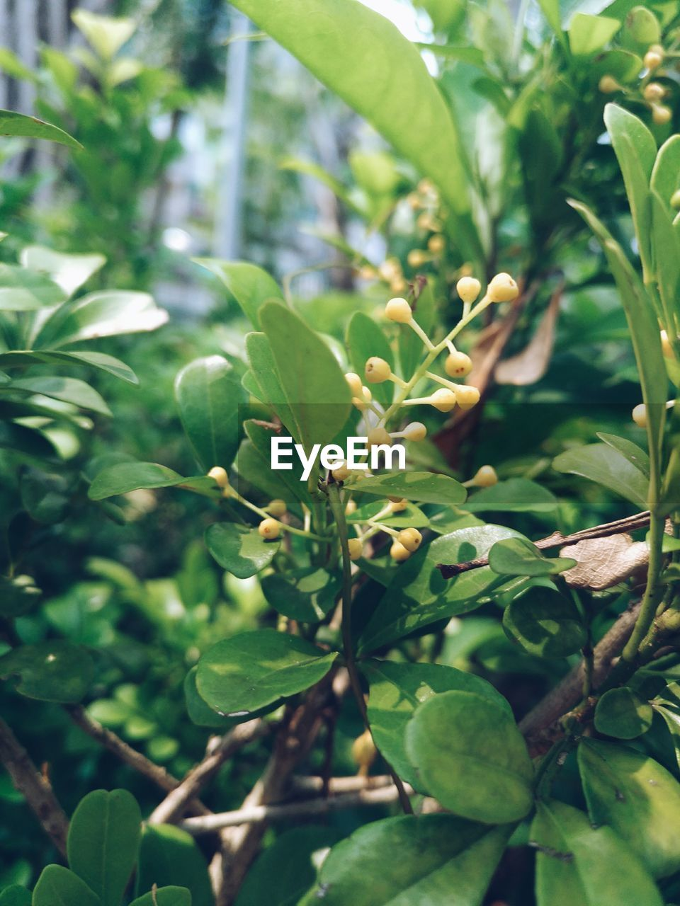 green color, growth, leaf, nature, plant, beauty in nature, day, outdoors, no people, tree, close-up, freshness