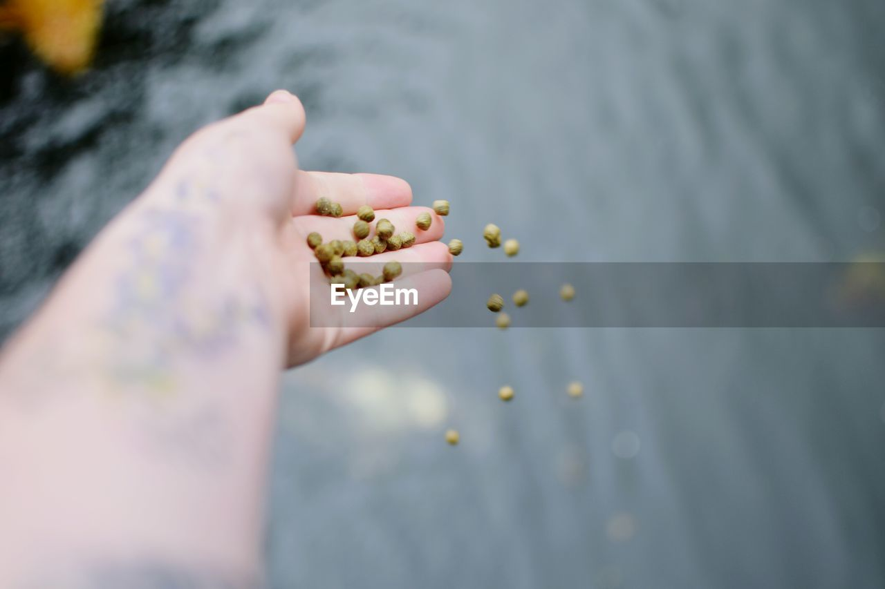 Cropped Image Of Person Releasing Seeds In Lake