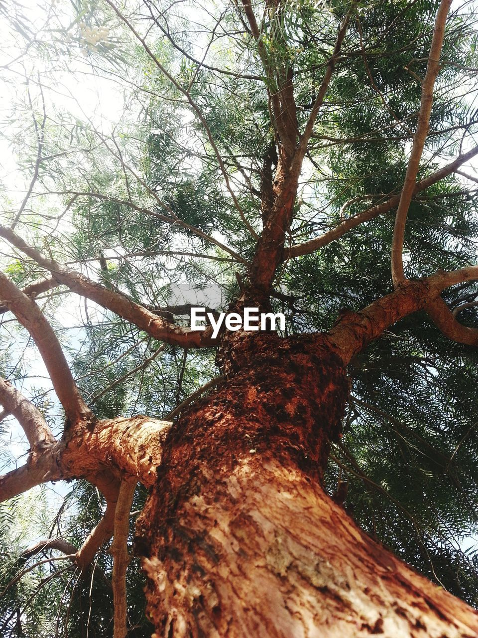 tree, tree trunk, nature, low angle view, branch, forest, day, tranquility, outdoors, growth, no people, beauty in nature, sky