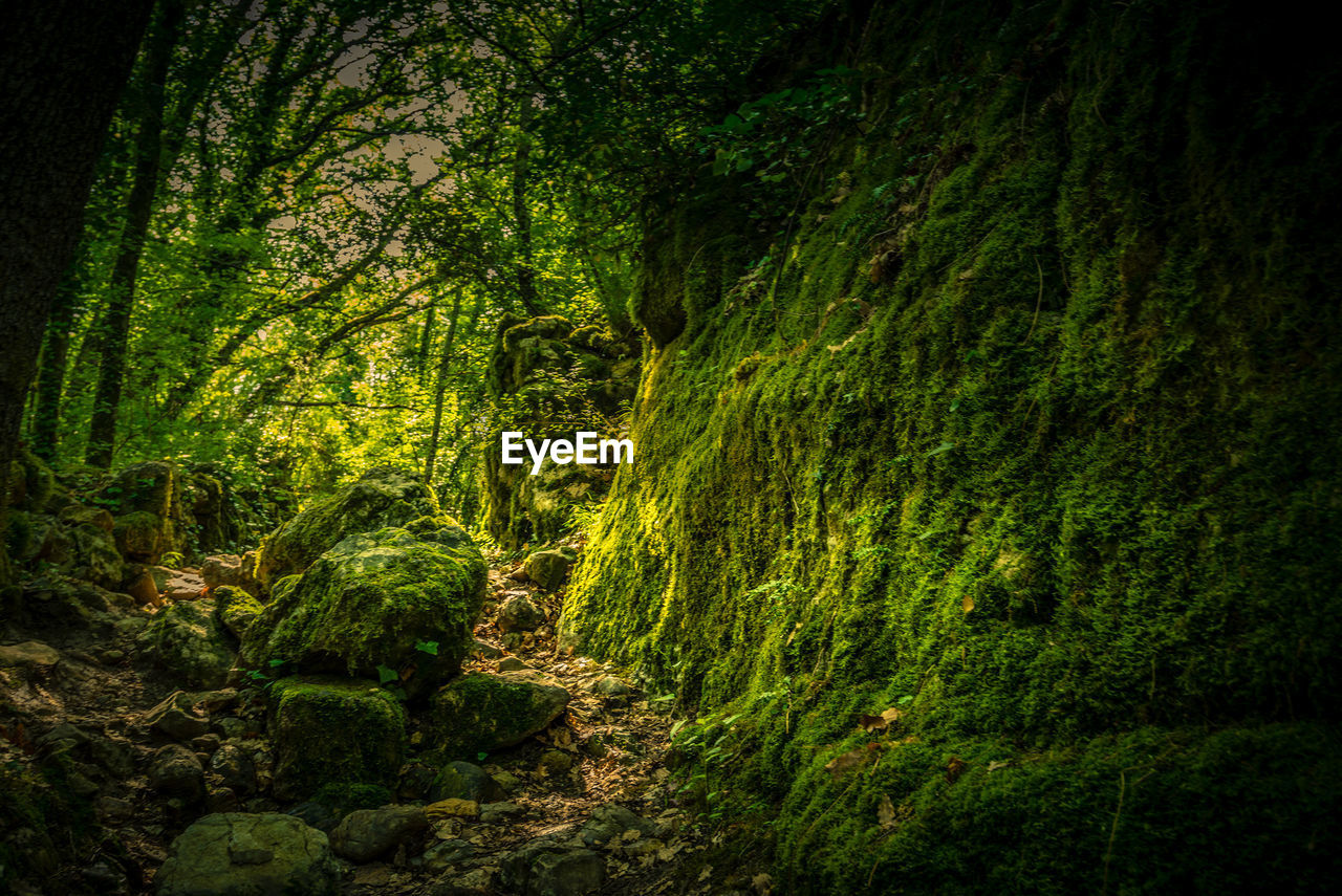 forest, plant, tree, beauty in nature, land, green color, lush foliage, foliage, tranquility, woodland, no people, tranquil scene, scenics - nature, nature, growth, environment, day, footpath, rainforest, outdoors