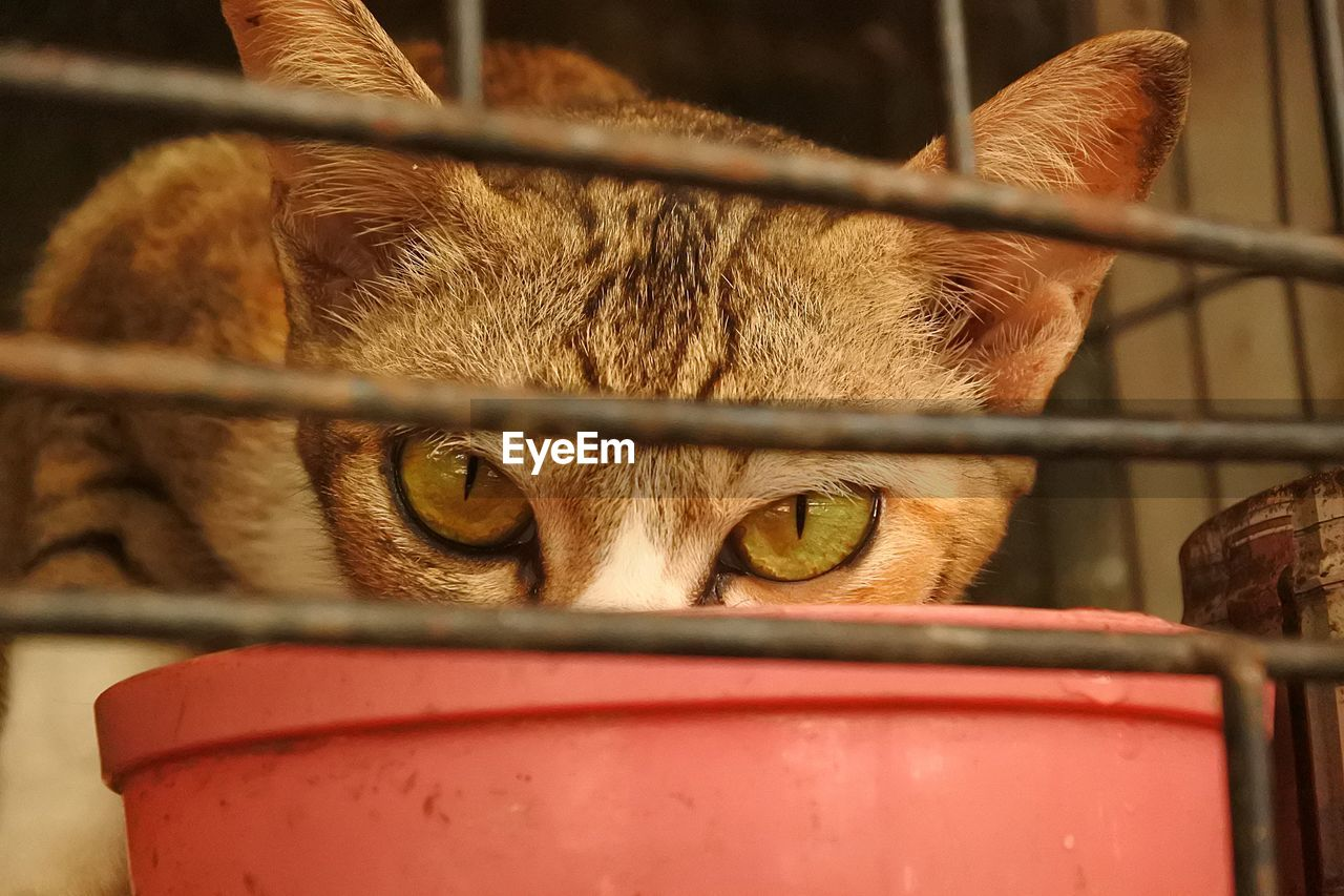 mammal, one animal, animal themes, animal, domestic animals, pets, domestic, container, animal body part, close-up, vertebrate, metal, no people, selective focus, cage, cat, day, animal head, barrier, boundary, drinking, whisker, animal eye, herbivorous