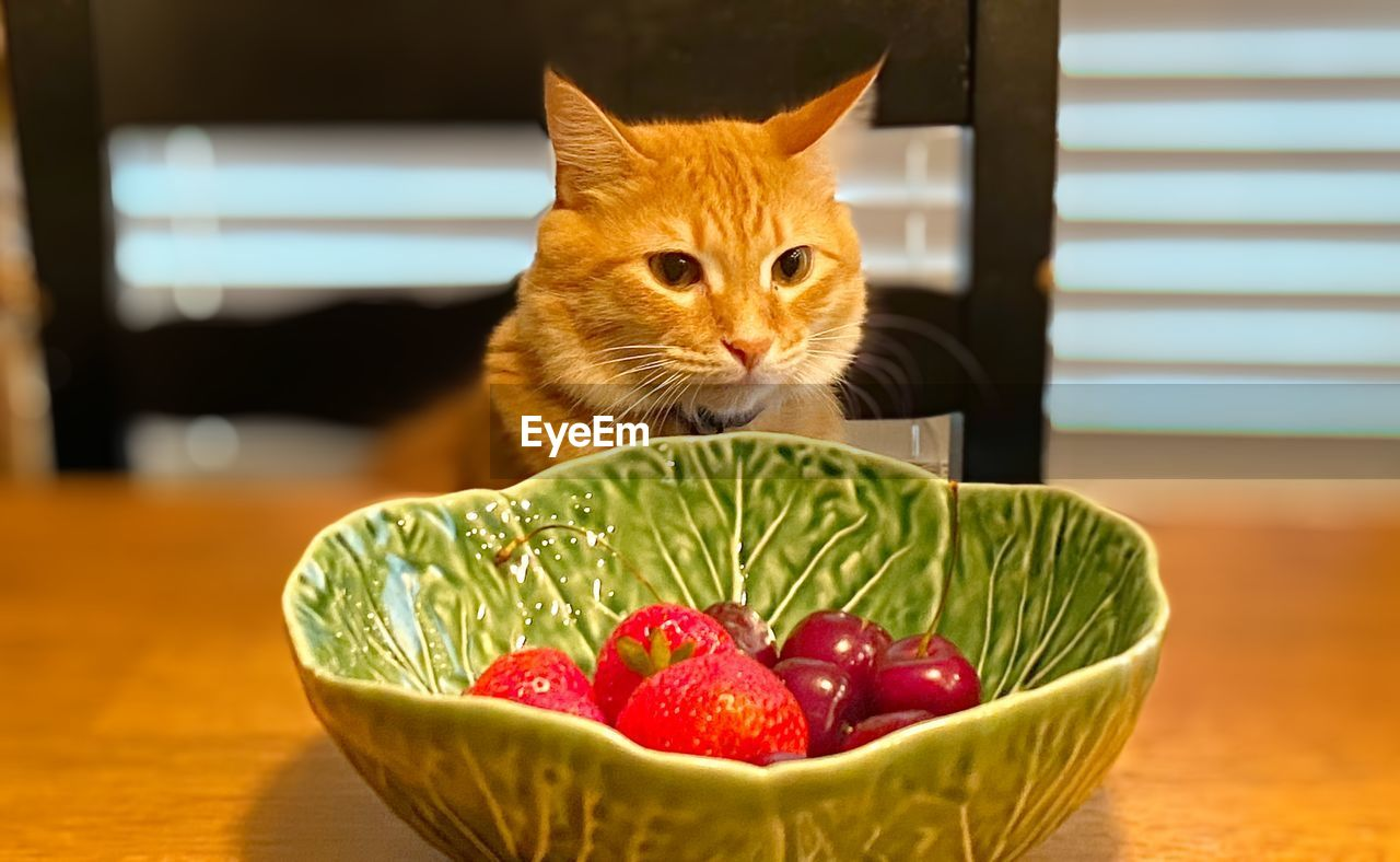 CLOSE-UP OF A CAT WITH FRUITS IN BOWL