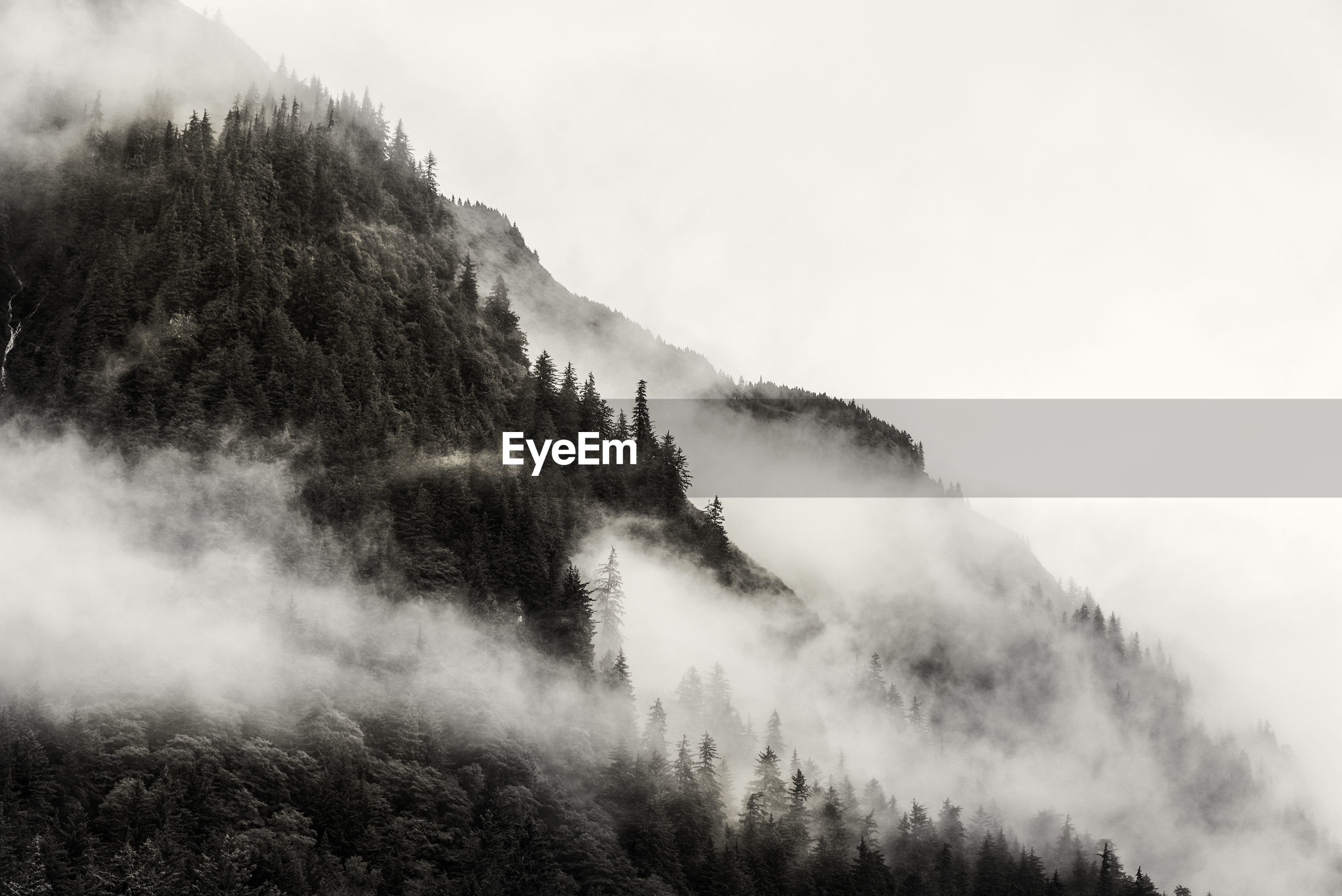 Trees on mountain during foggy weather