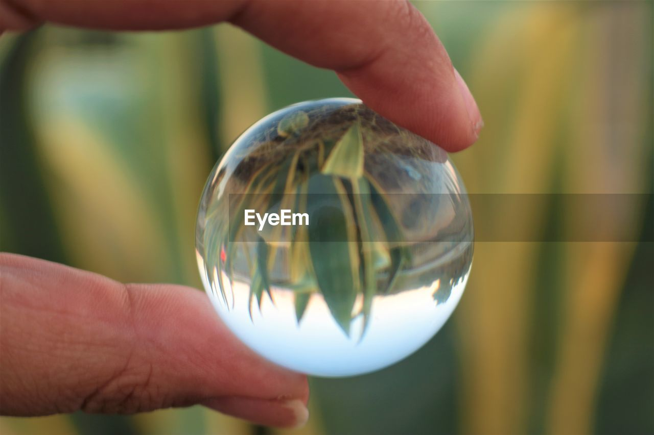 Cropped hand holding crystal ball