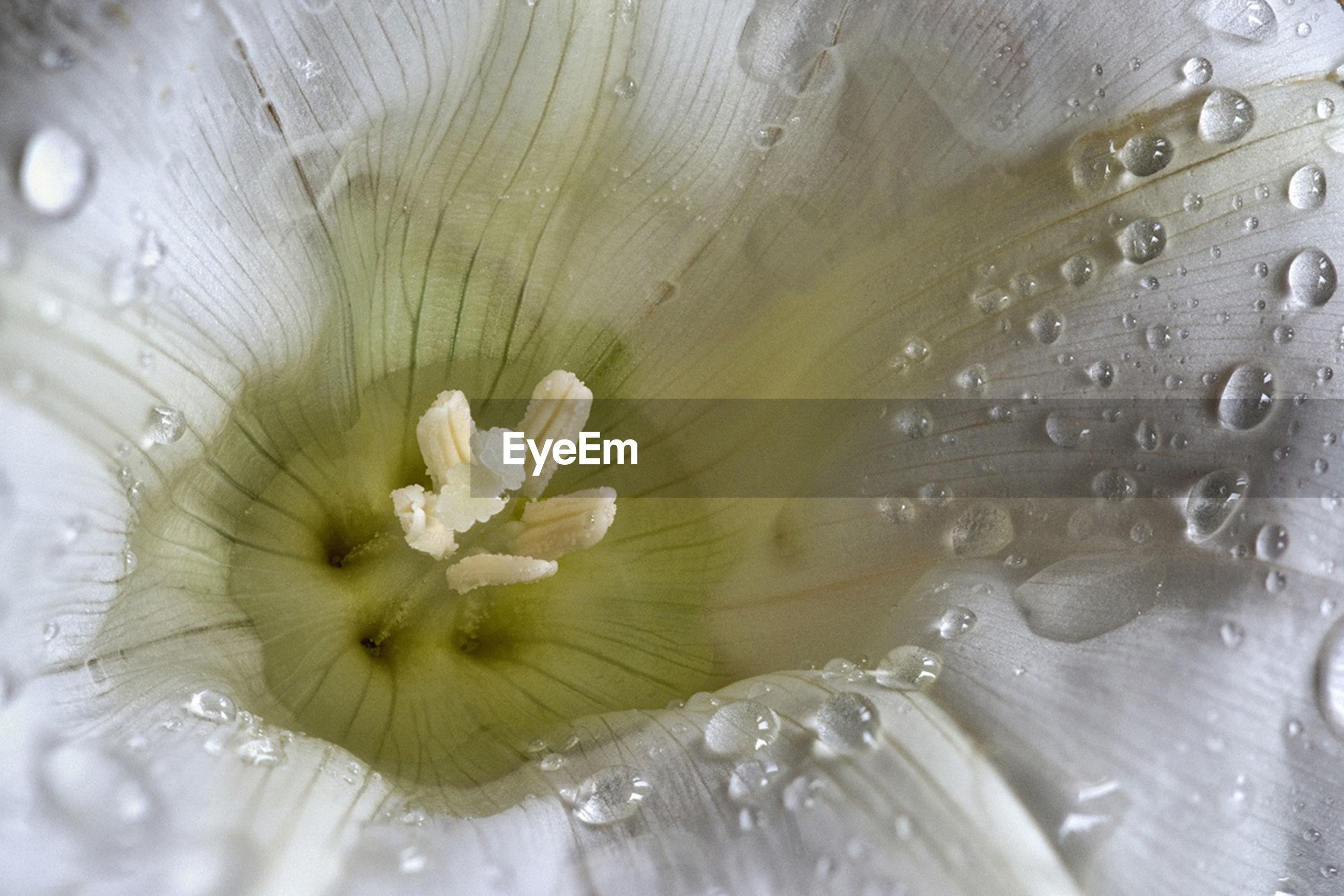 FULL FRAME SHOT OF WATER ON WHITE FLOWERING