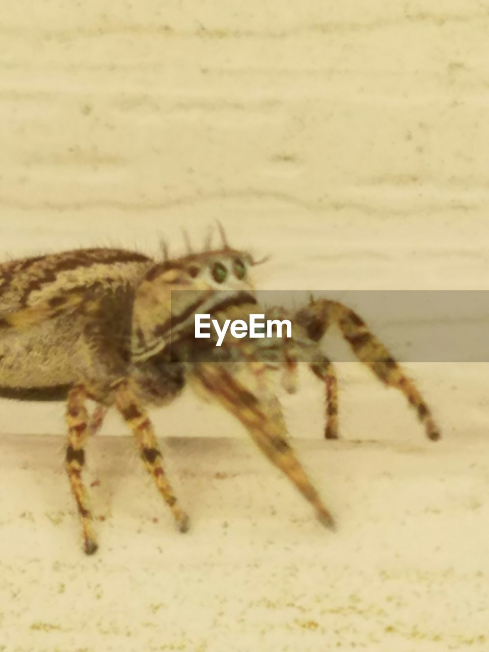 one animal, animal themes, animals in the wild, spider, animal wildlife, no people, full length, close-up, indoors, day