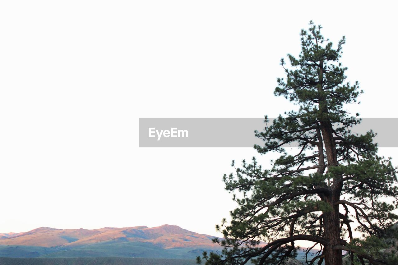 tree, clear sky, mountain, nature, scenics, beauty in nature, tranquility, day, no people, growth, tranquil scene, outdoors, landscape, low angle view, branch, sky