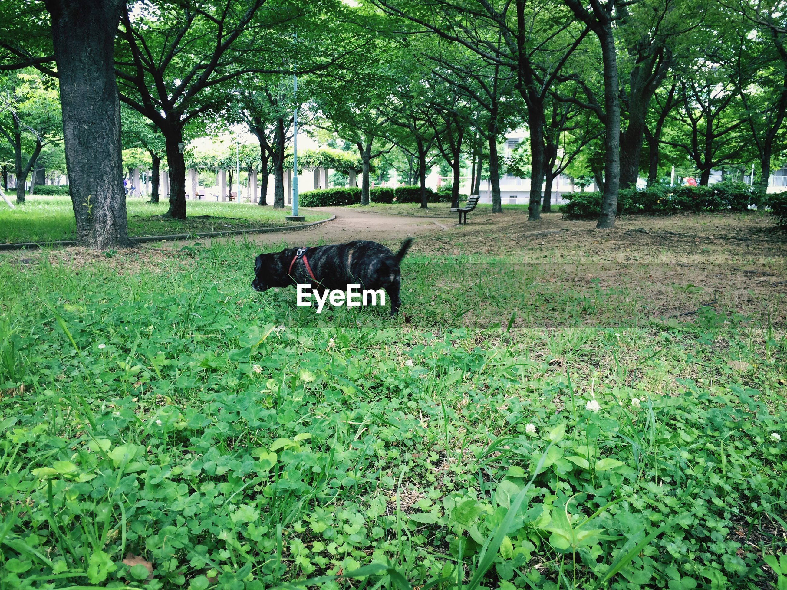 tree, animal themes, one animal, mammal, grass, domestic animals, growth, pets, green color, nature, tree trunk, tranquility, field, dog, grassy, park - man made space, forest, day, plant, no people