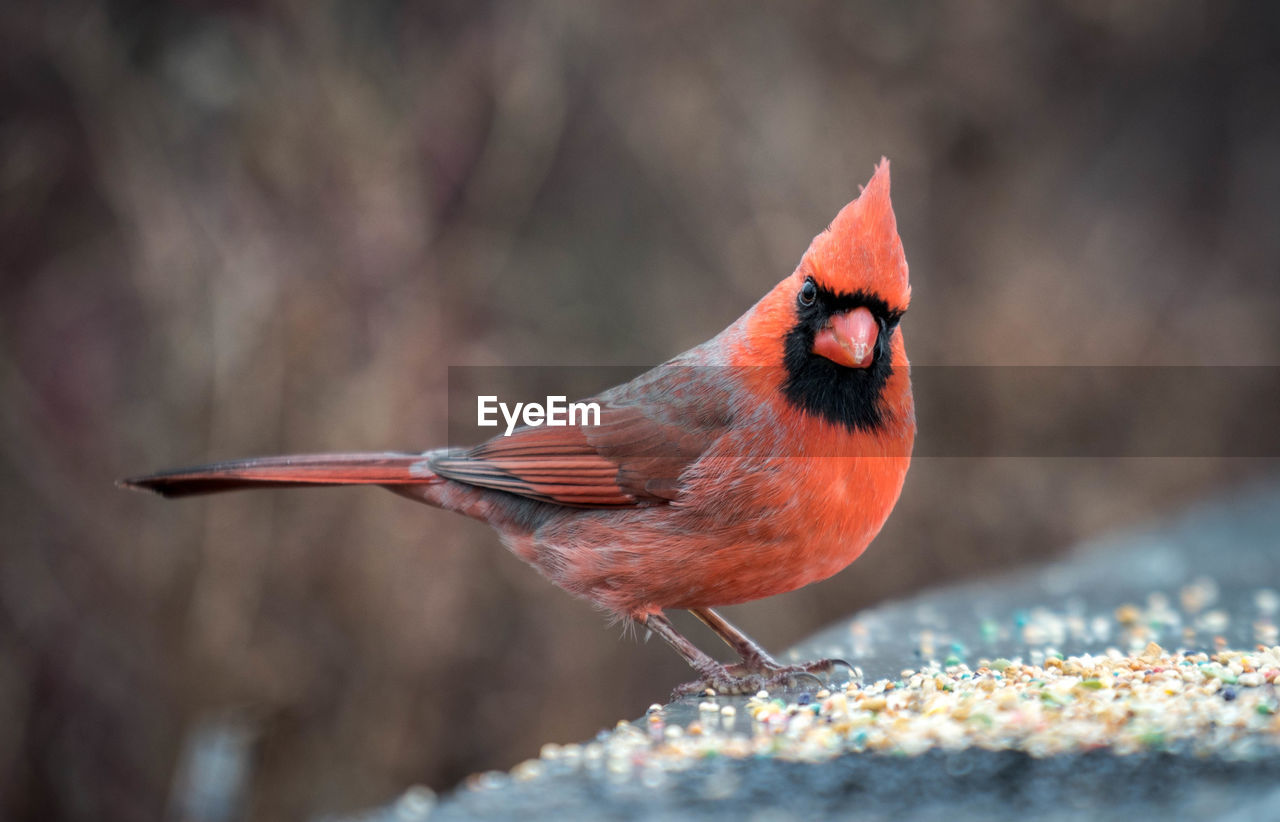 Close-Up Of Bird Perching On Red Outdoors