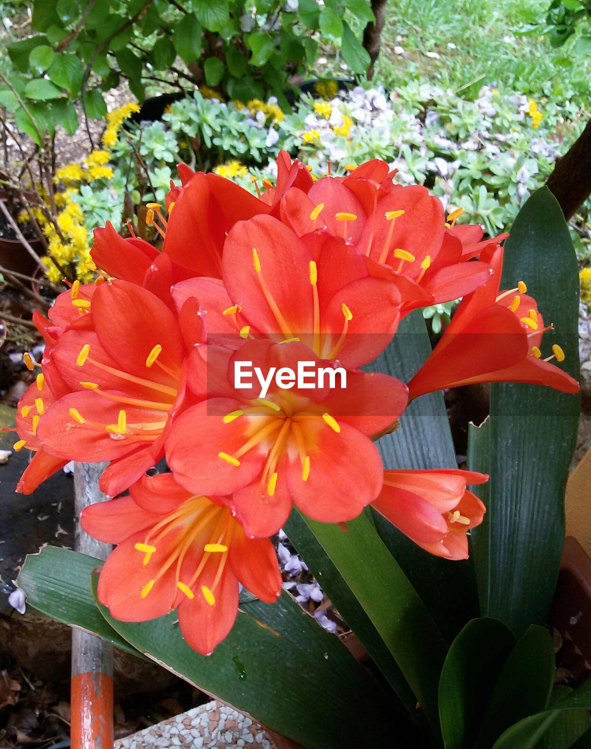 flower, petal, freshness, flower head, fragility, growth, beauty in nature, blooming, nature, plant, high angle view, leaf, close-up, park - man made space, red, in bloom, pollen, day, single flower, outdoors